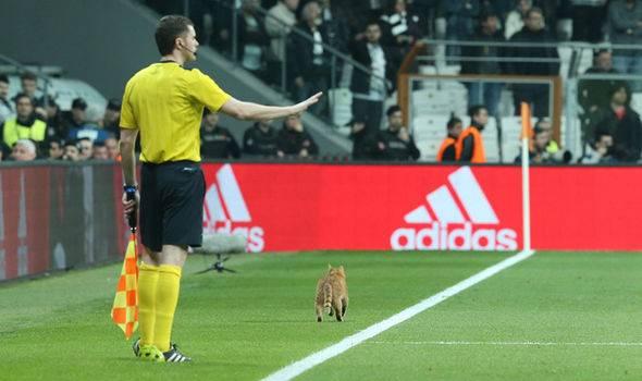 Gara-Gara Kucing, Besiktas Didenda oleh UEFA