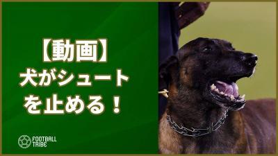 【動画】ピッチに乱入した犬がシュートを止める!