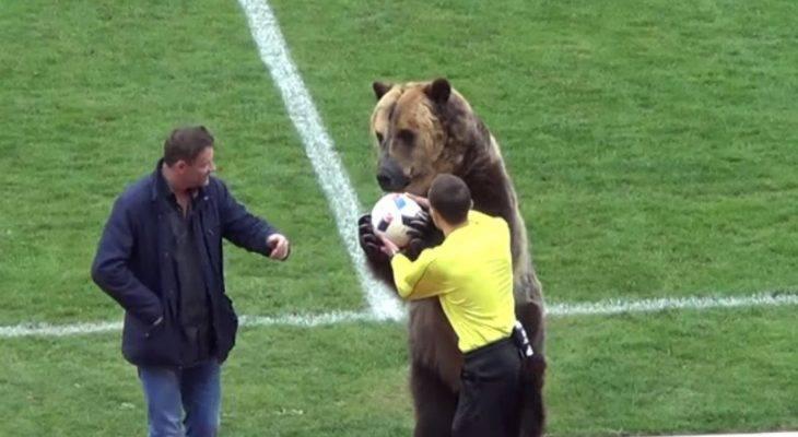 Aksi-aksi binatang yang pernah tampil menghiburkan penonton di stadium